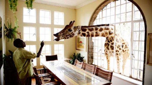 A visitor at Giraffe Manor in the Ngong Hills near Nairobi.