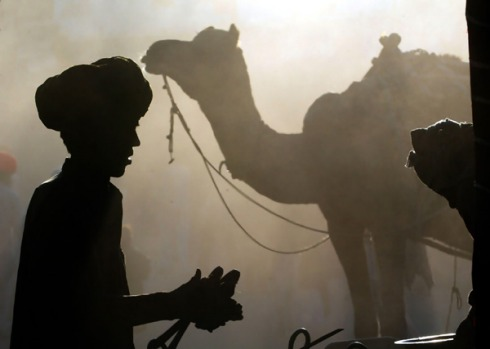 Pushkar Camel Fair. Rajasthan, northern India. The small but perfectly formed town of Pushkar hosts the yearly gathering ...