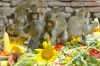 Lopburi Monkey Banquet, Thailand. Festivals come no wilder than the monkey banquet that unfolds 150 kilometres north of ...
