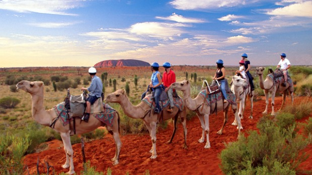 Decisions decisions ...  camels are an alternative way to see Uluru.