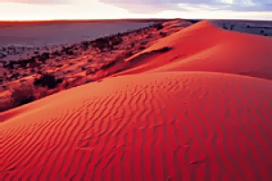 Sand swell ... the Simpson Desert has the longest network of parallel sand dunes in the world.