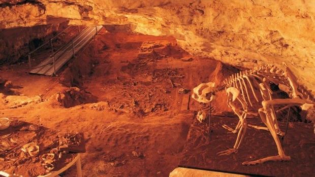 A fossil of a mammal in the Naracoorte Caves.     Naracoorte Caves, Limestone Coast  Janine Yvanovich  Manager Visual ...