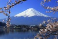 Iconic: Mount Fuji in spring.