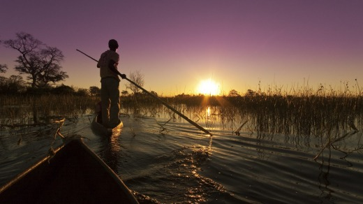 Traditional canoes traverse the wetlands in Okavango, Botswana.