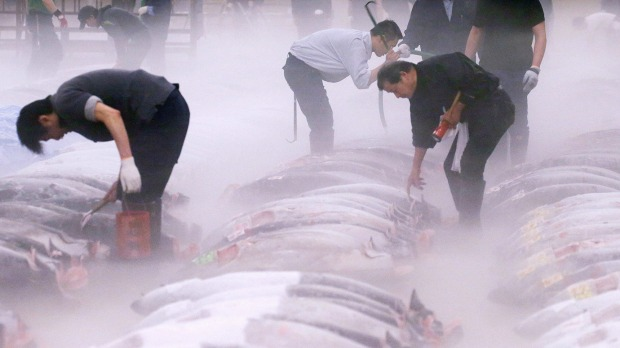 TSUKIJI FISH MARKET, TOKYO: Tsukiji's live tuna auctions have become Tokyo's most unlikely tourist attraction, with ...