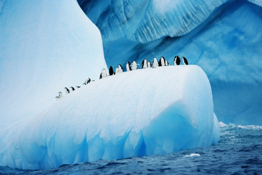 "In Antarctica ""life-changing moments happen constantly"". Chinstrap penguins cruise atop an iceberg."