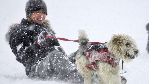 The Speights Dog Derby is a highlight of the Queenstown Winter Festival.