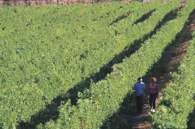 Margaret River has developed a global reputation for high quality wines – particularly with grapes such as Semillon and ...