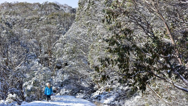 Snow builds ahead of the season ski opening at Falls Creek.