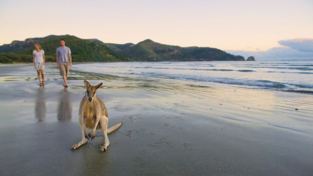 Smalleys Beach, a pocket of tranquillity tucked away in Cape Hillsborough National Park near Mackay.