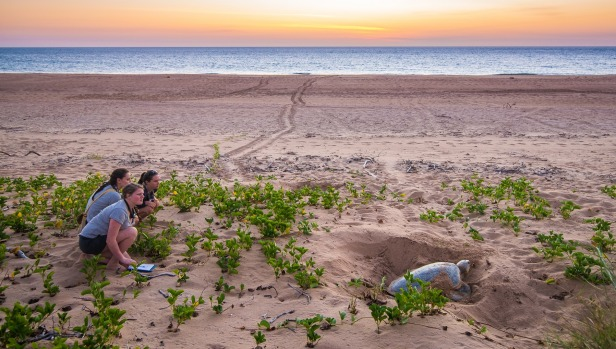 BARE SAND ISLAND, NORTHERN TERRITORY: If you were marketing an island, naming it Bare Sand wouldn't be smart (even if it ...