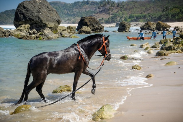 A horse on shore at Nihiwatu.