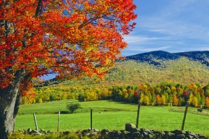 Autumn glory: The rolling hillsides of New Hampshire.