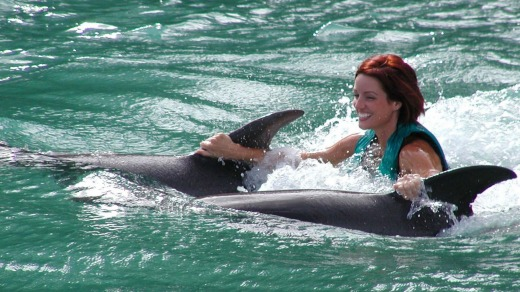 At Dolphin Cove you can swim with dolphins.