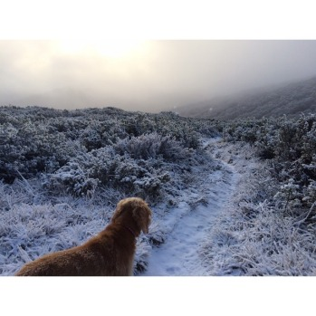 @samskis1 morning trail run with the pup.