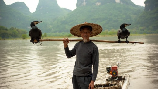Cormorant fisherman in Xingping, Guangxi.