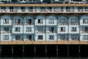The Edgewater Hotel on the Seattle waterfront.