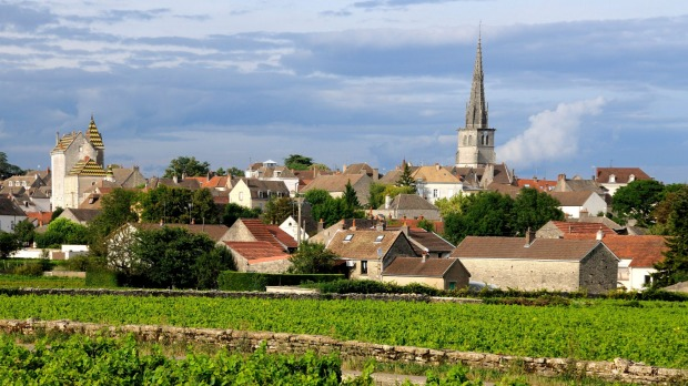A vineyard at Meursault, Burgundy. The Burgundy region of east-central France is famous for producing some of the ...