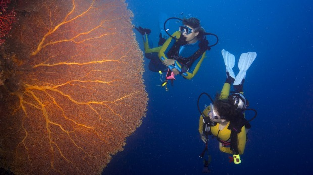Scuba divers with a giant fan coral off the island of Palau in the Pacific Ocean.