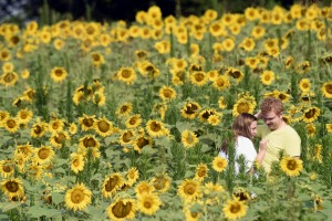 Madison McCann and Zack Hill explore a field of sunflowers at Forks of the River Wildlife Management Area on Saturday, ...