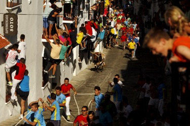 People hold onto windows to avoid a bull during the 'Toro de Cuerda' (Bull on Rope) festival in Grazalema, southern ...