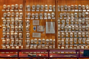 A cabinet of skulls in the Mütter Museum of The College of Physicians of Philadelphia.