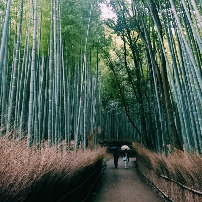 This was on a rainy day in Kyoto and I was struggling to get a good photo of the bamboo grove when suddenly the crowd ...