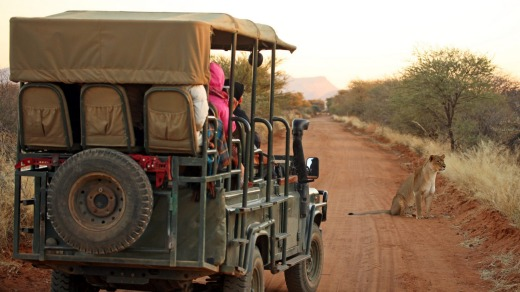 Safari Jeep and lion in Namibia.