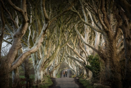 14. The Dark Hedges, Northern Ireland. Northern Ireland's most photogenic country road, flanked by gloriously gnarled ...