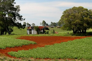 The rich red soil of Dorrigo.
