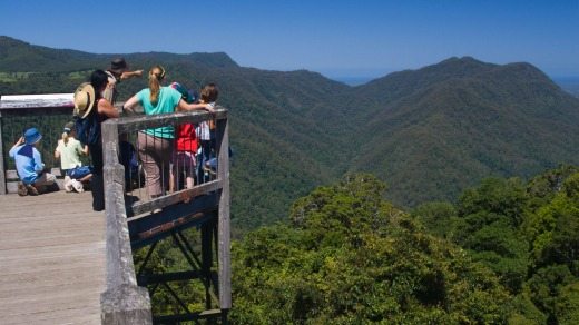 Park ranger points out aspects of Dorrigo National Park from the elevated Skyway at the Rainforest Centre.