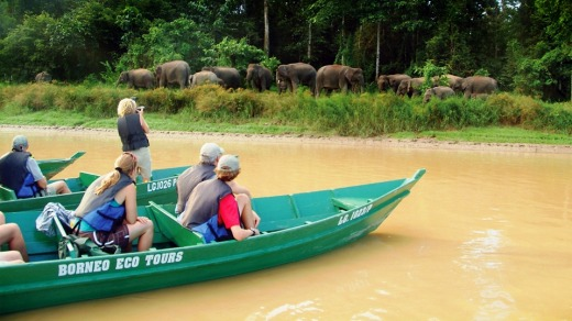 Travellers spot pygmy elephants by a river in Sabah, Malaysia.