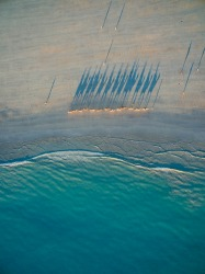 Camels at Sunset. Drone camera action at Cable Beach, Western Australia. The camel convoys make for great viewing from ...