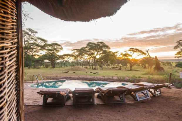 The swimming safari: On a hot day in the African savannah, could anything be better than cooling down in an infinity ...
