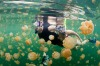 The jellyfish lake: No, it's not as bad as braving crocodile-infested waters, but we still don't savour the thought of ...