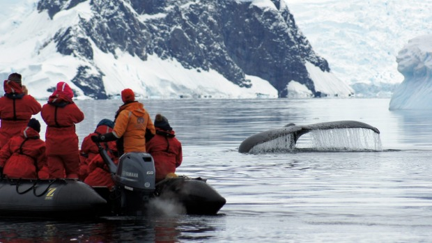 Getting up close with whales.