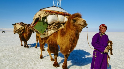 A camel carries goods through the deserts of Mongolia.