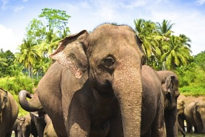 For unbridled culture and nature, a trip to stunning Sri Lanka is hard to beat.