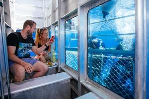 Forget the wetsuit - travellers can now dive with great whites without having to leave the boat.