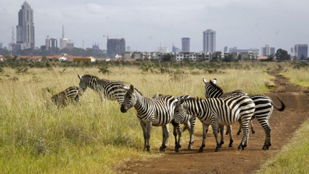 Urban neighbours: Nairobi National Park in Kenya.