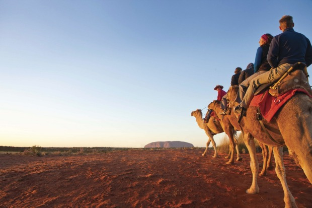 """CAMEL RIDES: There might be little water around Uluru, but that doesn't stop the so-called """"ships of the desert"""" from ..."""