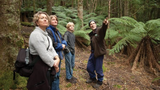 Forest Walks Lodge guests on a guided walk of old growth eucalypt forest on Quamby Bluff.