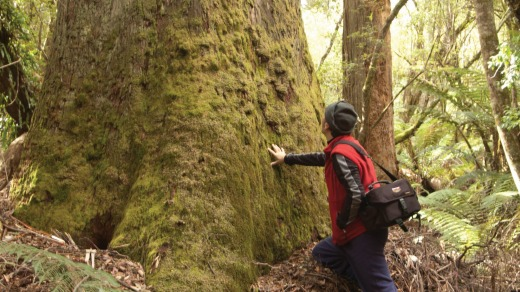 A lodge guest in the  eucalypt forest.