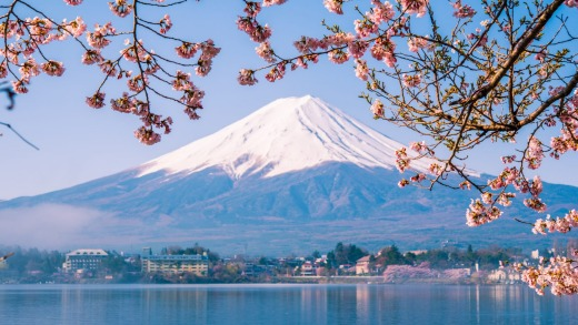 Mt. Fuji and cherry blossoms in Japan.