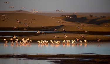 Flamingos photographed on a series of small lakes, surrounded by desert at Walvis Bay was a highlight of a recent trip ...