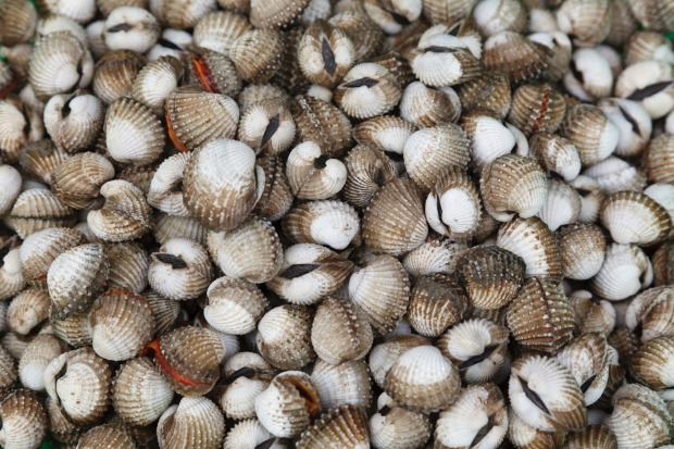 Blood clams contain a number of viruses and bacteria that can cause hepatitis A, E, typhoid and dysentery.