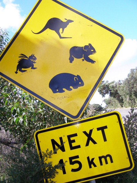 Cape Conran Coastal Park. There's all sorts of weird creatures about, if you believe this roadside warning near the ...