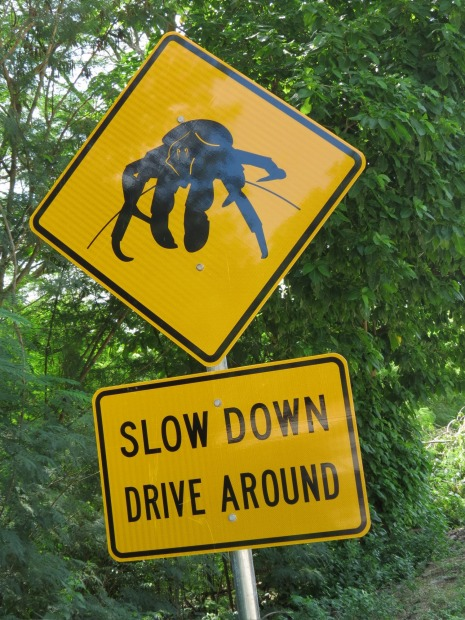Christmas Island. It might look like a scary six-legged space monster, but what this sign, found on all the roads of ...