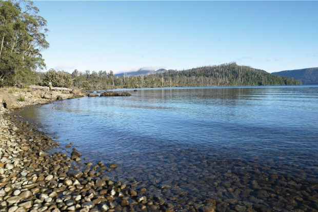 Lake St Clair, Tasmania: It takes a certain strength of character to go swimming in Tasmania's chilly waters, nowhere ...