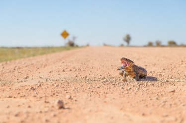 In the school holidays we took the opportunity to visit the Flinders Ranges and drive the Strzelecki and Birdsville ...